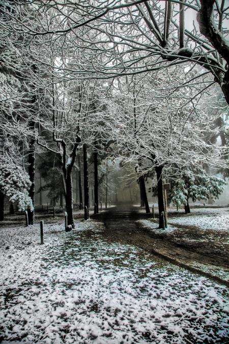 Fotografia: il bosco incantato