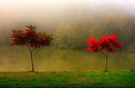 fotografare i colori dell'autunno