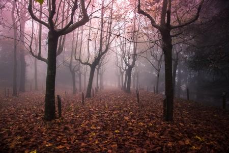 Atmosfere, luci e colori d'autunno